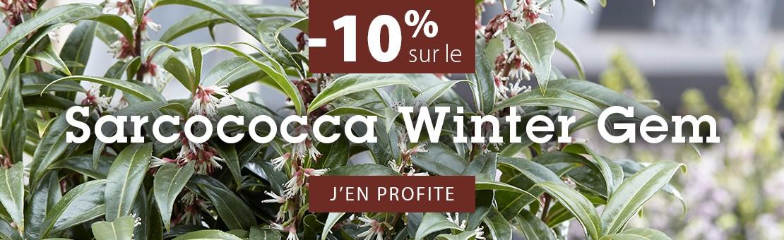 PROMOTION 10% sur SARCOCOCCA HUMILIS WINTER GEM
