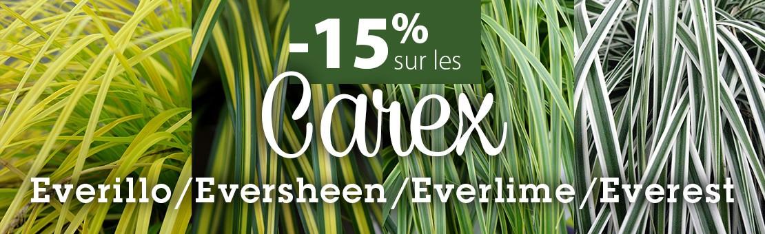 PROMOTION 15% sur nos CAREX
